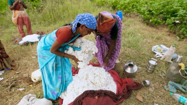 India: Farmers Increase Cotton Fields
